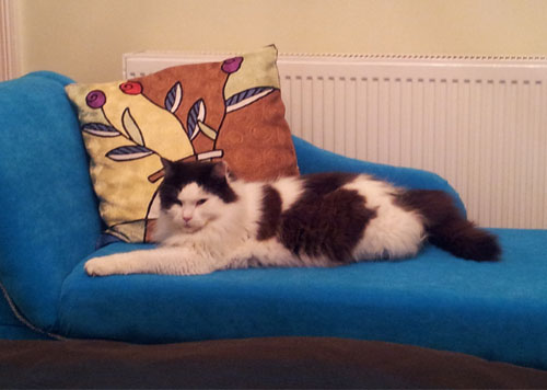 Fudge on chaise longue