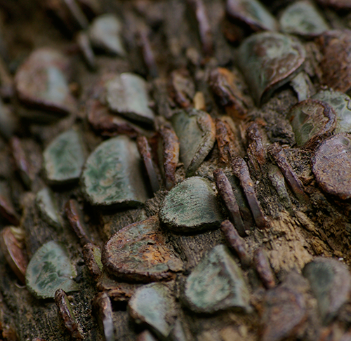 Bolton-Abbey-coin-tree
