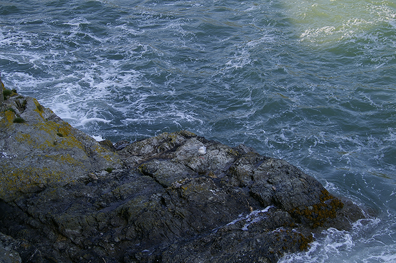 Seagull-on-the-rocks
